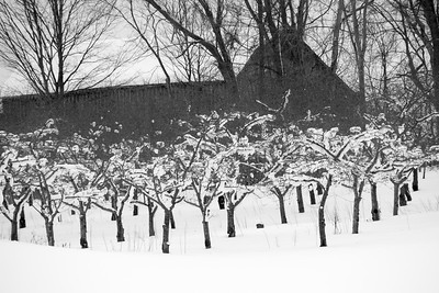 Snow-covered Cherry Farm