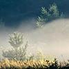 Fog on the Bog