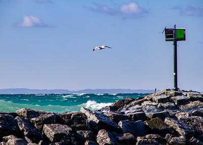 Seagull over Breakwater