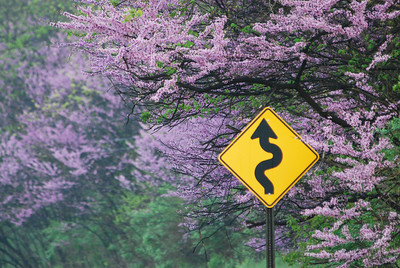 Pettis Ave. near Honey Creek Ave.,in Ada, MI,has the finest stand of Redbud anywhere