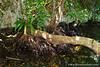 Eli Malk Island Rainforest
