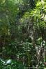 Kemurbeab Island Rainforest