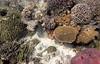 Micronesia 2007 : Palau coral IMG043