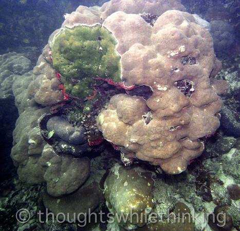 Micronesia 2007 : Palau coral IMG127