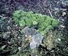 Micronesia 2007 : Palau coral IMG102
