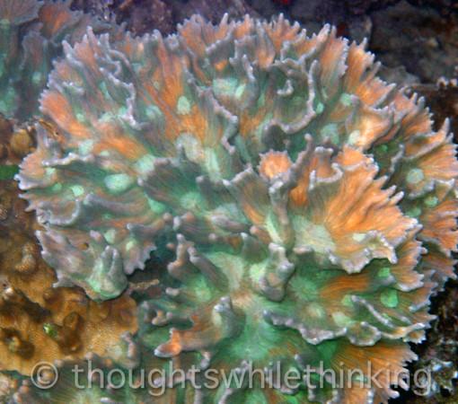 Micronesia 2007 : Palau coral IMG_1192.JPG