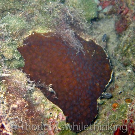 Micronesia 2007 : Palau coral IMG_1166.JPG