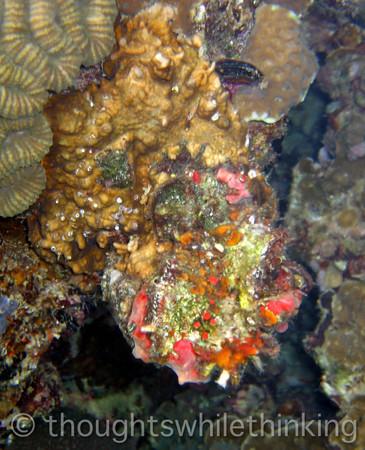 Micronesia 2007 : Palau coral IMG_1185.JPG