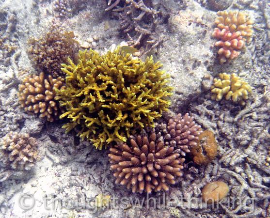 Micronesia 2007 : Palau coral IMG079