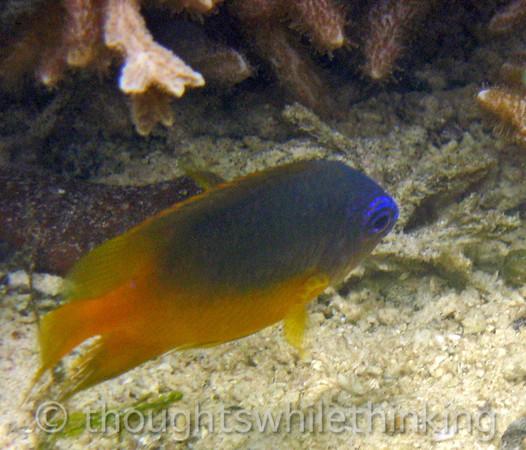 Micronesia 2007 : IMG_1224.JPG