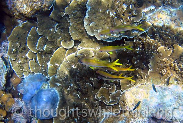 Micronesia 2007 : IMG_1335.JPG