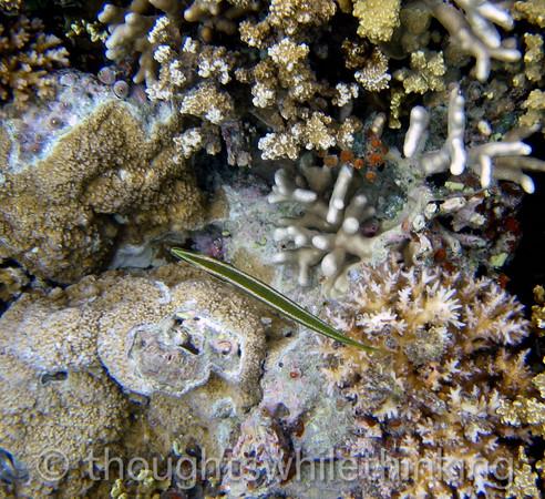 Micronesia 2007 : IMG_1282.JPG
