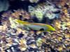 Micronesia 2007 : IMG_1197.JPG