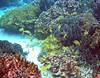 Micronesia 2007 : Bluestripe Snapper & Striped Large-Eye Bream IMG_1401.JPG