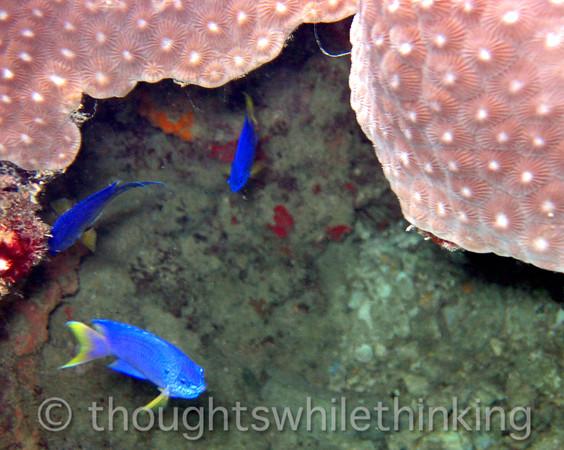 Micronesia 2007 : IMG_1239.JPG