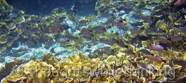Micronesia 2007 : IMG_1362.JPG