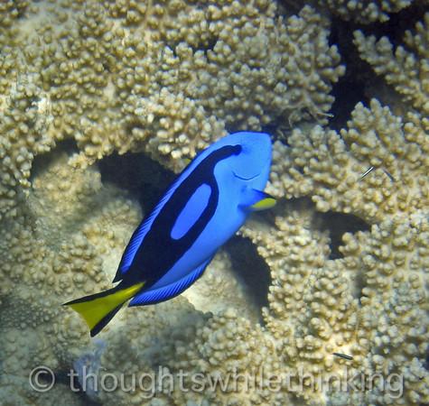 Micronesia 2007 : fish