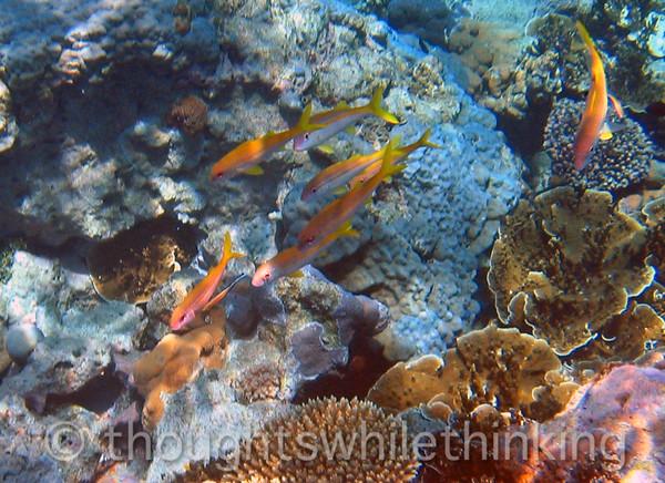 Micronesia 2007 : IMG_1334.JPG