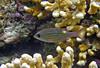 Micronesia 2007 : IMG_1451.JPG