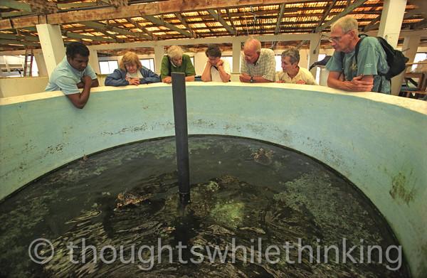 Micronesia 2007 : Palau turtle tank at the govenment fish farm IMG230