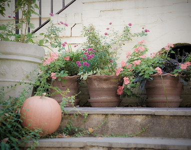 Potted plants and pumpkins in the afternoon sun