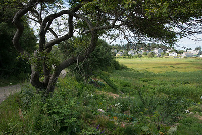Part of the Farm and Meadow, Monhegan.