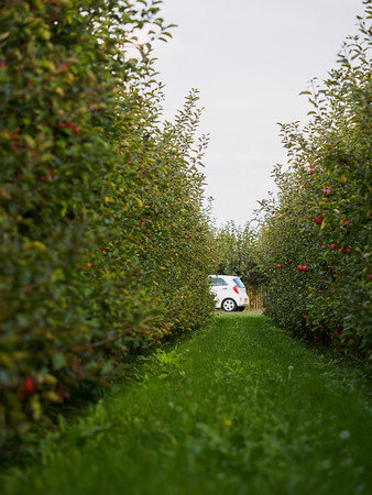 Apple Orchard with Car