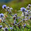 Flowers in the hills near Lahic.<br /> <br /> Lahic, Azerbaijan