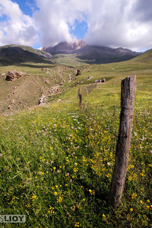 Fields of wildflowers.<br /> <br /> <br /> near Xinaliq, Azerbaijan