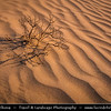 Middle East - GCC - Bahrain - Desert area around Tree of Life - شجرة الحياة‎ - Shajarat al-Hayah - Barren area of Bahraini Arabian Desert