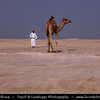 Middle East - GCC - Bahrain - Desert Barren area - Bahraini Arabian Desert - Traditional life - Man and Camels