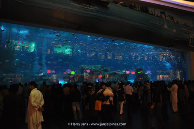 30m aquarium at biggest Mall Dubai