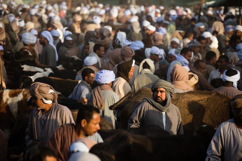 Scene from the Daraw Livestock Market near Aswan, Egypt.