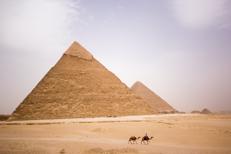 Camels cross the desert in front of the Pyramids at Giza, Egypt.