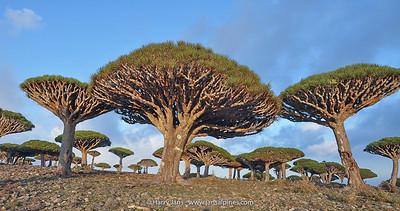 Jemen-Socotra 2012