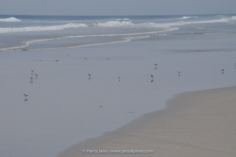 sea birds at Riyan beach