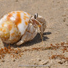 hermit crab at Riyan beach