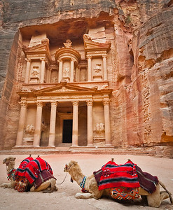 Camels outside of the Treasury, Petra, Jordan