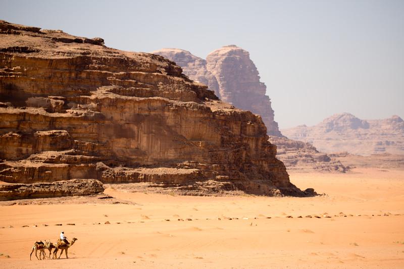 Camels on the move in Wadi Rum, Jordan.
