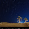 Middle East - GCC - Kuwait - Kuwaiti Desert - Night sky over Two Palm Trees in sea of sand dunes of Arabian Desert - Startrails - Star-trails