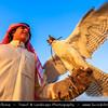 Middle East - GCC - Kuwait - Kuwaiti Desert - Falcon, bird of prey known for incredible hunting skills, and his Falconer Man in Traditional Arabic Dress - Dishdasha