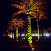 Illuminated palm-lined promenade on the seawall at Salmiya, Kuwait