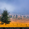 Lebanon - Libnan - Lubnan - Bcharré - Mountain Landscape with solitary trees during misty and moody weather