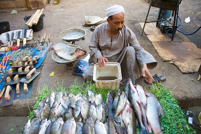 Fresh fish in the souq
