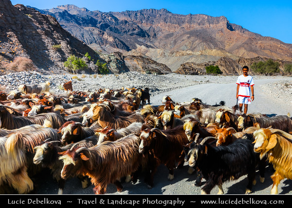 Middle East - Sultanate of Oman - South Batinah Governorate - Hajar Mountains - جبال الحجر - Stone Mountains - Spectacular wall of mountains with dramatic canyons and rocky valleys in northeastern Oman - Shepherd with his goats