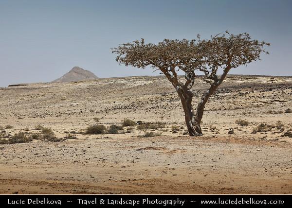 Middle East - Sultanate of Oman - Dhofar Province - Salalah Area - صلالة - Ṣalālah - Rugged mountains during Khareef - Rainy Season bringing misty & foggy weather