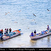 Middle East - Sultanate of Oman - Ash Sharqiyah Region - Sur - صور - One of ancient Omani maritime cities & important destination point for sailors on coast of Gulf of Oman - Fishermen with fresh catch on the boat