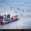 Middle East - Sultanate of Oman - Ash Sharqiyah Region - Sur - صور‎ - One of ancient Omani maritime cities & important destination point for sailors on coast of Gulf of Oman - Fishermen with fresh catch on the boat