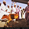 Middle East - Sultanate of Oman - Ad Dakhiliyah Region - Nizwa - نزوى‎ - Historical town - One of oldest cities in Oman - Nizwa Souk & Friday Cattle Market where hundreds of traditionally dressed locals come to trade goats, cows and other livestock