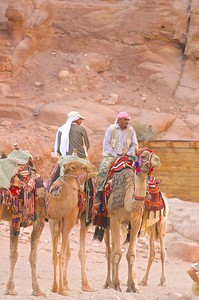 Camels and their owners